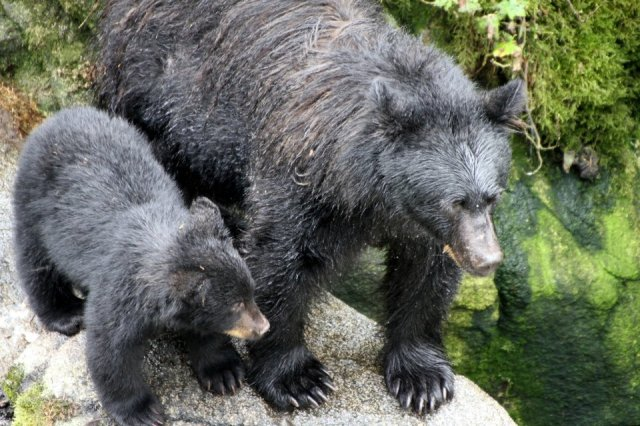 Bears off the bow