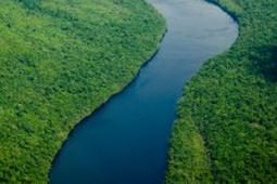 Decline in Amazon Rainforest Destruction