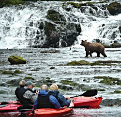 Kayaking to view a nearby Bear