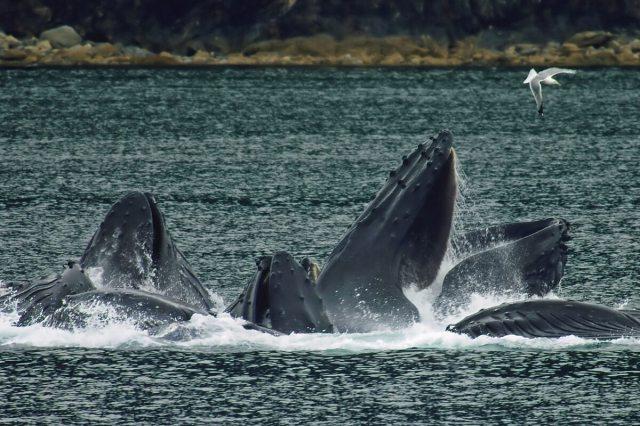 unca-Whales-Wildlife-Glaciers